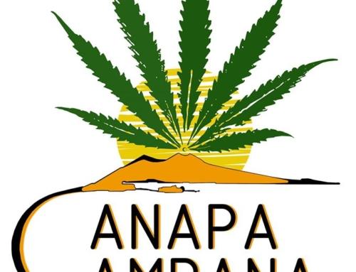 CanapaCampana